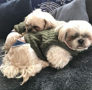 ひっつき虫のフクちゃん!#ミックス犬 #犬好きさんと繋がりたい