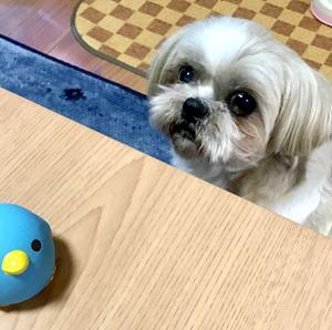 ダイソーの新製品、ペットおもちゃが可愛い!