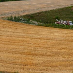 うねる大地の小麦畑