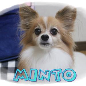 ミント♪9歳の誕生日(^v^)