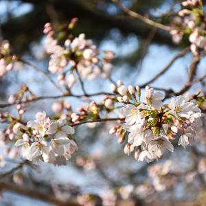 3月26日(月)ポカポカ陽気...。