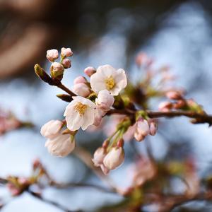 3月25日(日)萩は晴れて観光日和...。