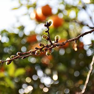 3月18日(日)春も目の前...。