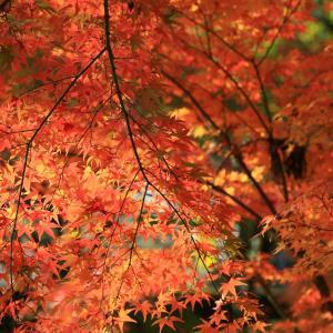 香川県大窪寺で紅葉撮影