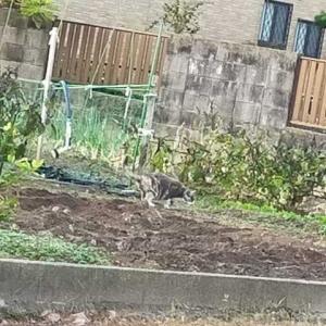 近所からトランペットのどんぐりころころが聴こえてくる、ほか、猫