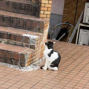 昨日出会った猫にまた会えたニャンと、ハコヅメ昨日最終回と巨人など色々