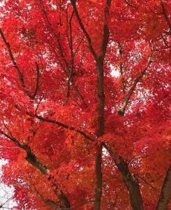 奈良公園の穴場発見!