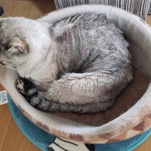 寒そうなベッド