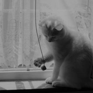窓辺でじゃれじゃれ