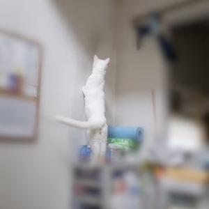 天井に何かいる
