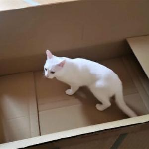 猫は段ボール箱が好きだが・・・