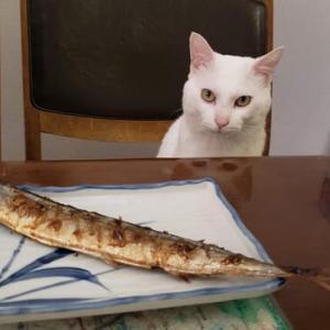 秋刀魚おすそ分け