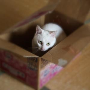 箱入りましろ
