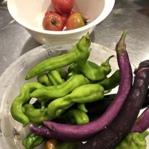 夏野菜の逆襲と去勢後の猫の発情