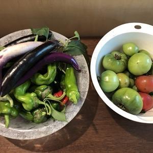 夏野菜総括&ハチの発情&今年最後の薪活