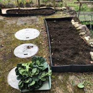 冬野菜の撤収と夏の菜園計画
