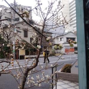 梅が咲いたー