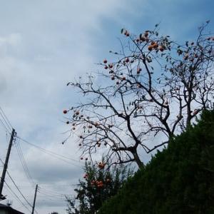 空は晴天、心は曇天
