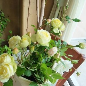 ぼくんちの薔薇です
