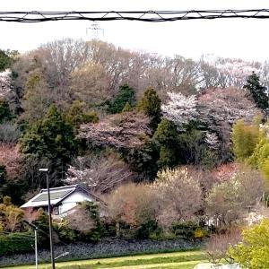 一年でこの数日しか見れない春の色