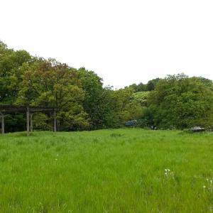 新緑の季節がやってきた  小山田緑地