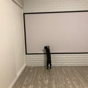 プロジェクタースクリーンを猫がひっかくw