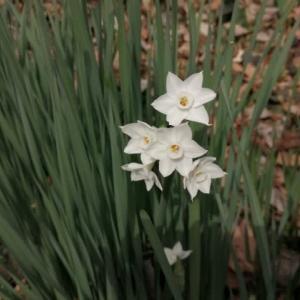 春よ、来い^^ 〜二宮