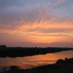 夕方の野原