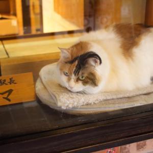 和歌山電鉄貴志川線の貴志駅と猫の駅長「たま」