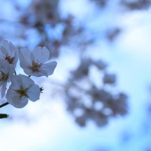 桜が咲いた2020
