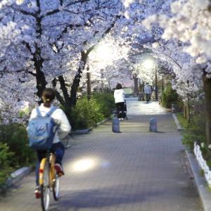 大阪八尾市・玉串川の夜桜2020