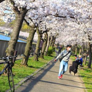 桜ノ宮・大川沿いの桜トンネル2020 #1