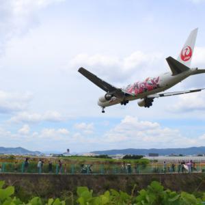 絶好の飛行機着陸スポット伊丹空港・千里川!JAL東京五輪特別塗装機も!