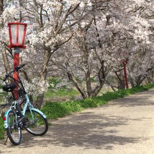 奈良県宇陀市の又兵衛桜へ近鉄榛原駅からレンタサイクルで行ってみた#3