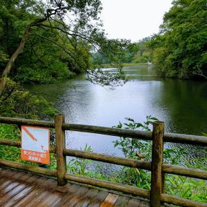 雨のむろいけ園地で森林散歩
