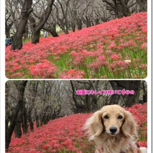 公園を散策しながら赤の世界を堪能したなの♪