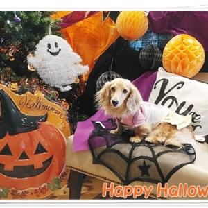 Happy Halloween♪ハロウィンの撮影スポットで変身なの♪