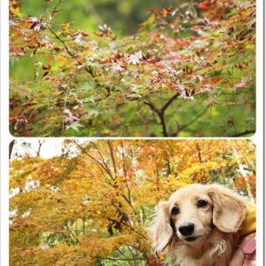 色づき始めた「紅葉の森」を満喫したなの♪@四季の森公園