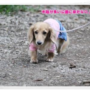 雨が降ってくる前に公園で軽くお散歩タイムなの♪