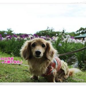 キレイな花菖蒲や紫陽花を堪能しながら公園散策を満喫したなの♪