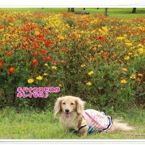 公園散歩のラストはキレイなお花とのコラボ祭りなの♪