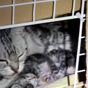 キティ。生まれました。