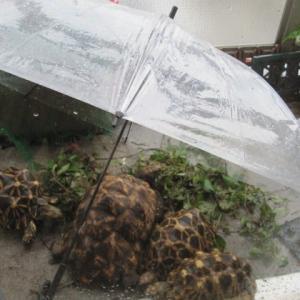 雨宿り食い