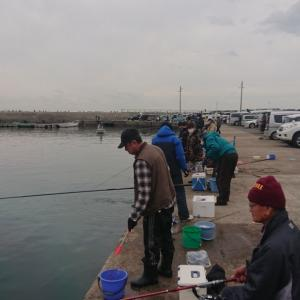 3月4日豊浜漁港【イワシ釣り】