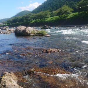 7月18日長良川郡上【鮎釣りって場所大事ですね】