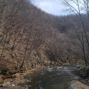 4/10 山へ 橋からの景色 2