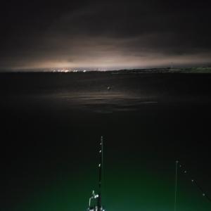 6/18ー19 夜釣り マメイカとニシン 2