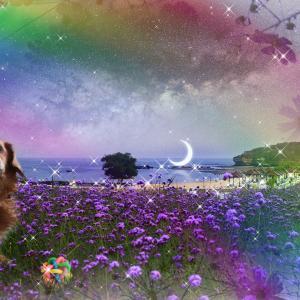 愛犬ショコラの天国への散歩 122日目