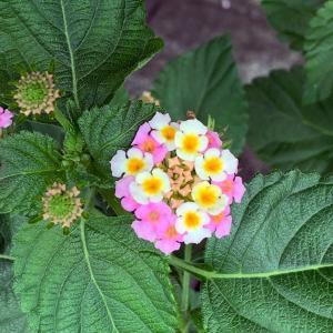 陽だまりの輪ホームページに先日の江戸東京たてもの園の様子がアップされました
