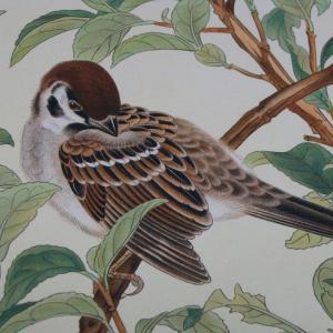 土岡春郊 (土岡泉)の『鳥類写生図譜』